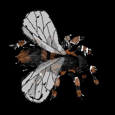 tarantula-with-wings