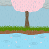 Rain and Cherry Blossoms